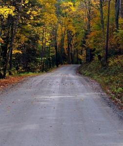 Fall scene with road and trees