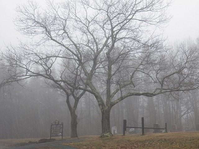 Trees with graveyard demonstrating nightmares for buying land