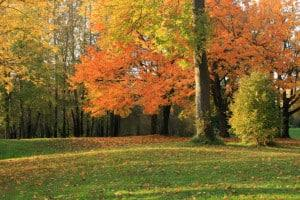 Fall leaves changing colors on trees helps you sell land