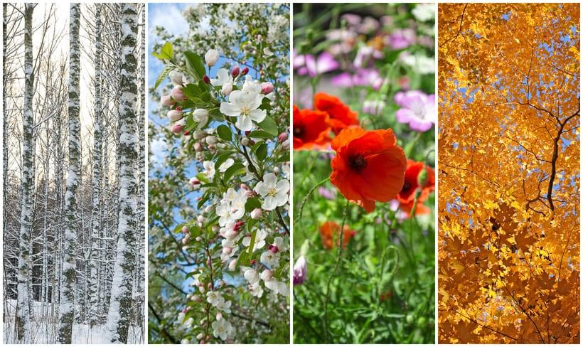 4 images of different seasons for selling land or lots